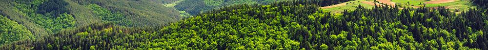 forêt bois