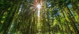 Le combustible bois, une énergie économique, renouvelable et durable