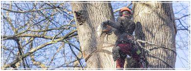 La filière bois génératrice d'emplois