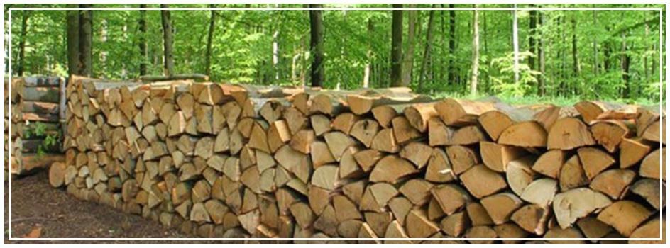 Connaitre les essences pour faire du bois, un excellent combustible