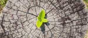 Chauffage au bois et qualité de l'air