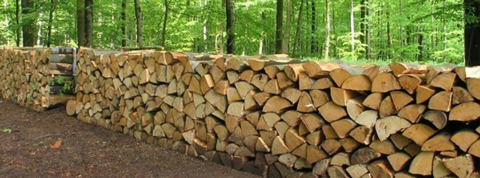 connaitre les essences pour faire du bois un excellent combustible onf energie bois. Black Bedroom Furniture Sets. Home Design Ideas
