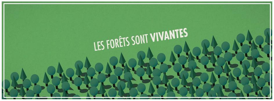 La forêt publique au service du climat