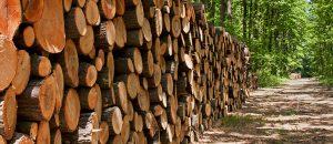 Les méthodes de séchage du bois du réseau ONF Energie Bois